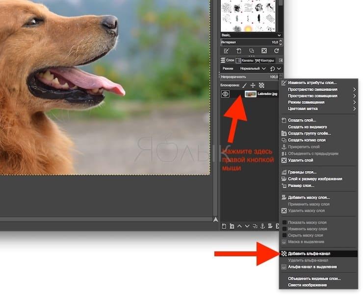Как в GIMP добавить к изображению поддержку прозрачности (альфа-канал)