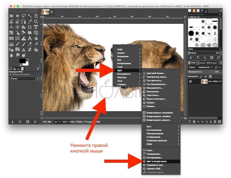 Удаление белого фона (или любого однородного) в GIMP
