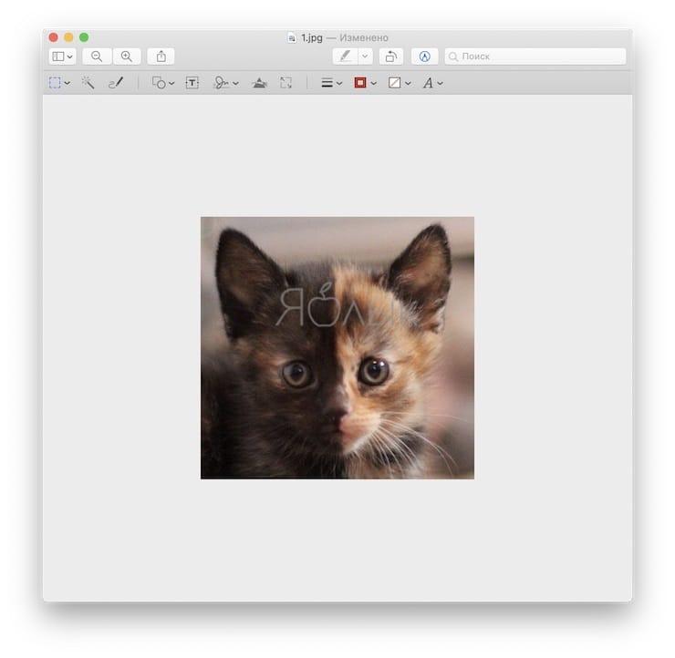 «Просмотр» на Mac (macOS): скрытые возможности редактора фото