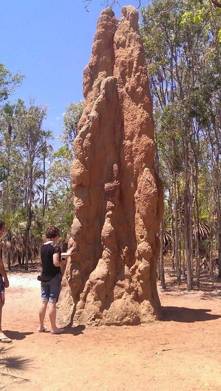 Термиты в Австралии
