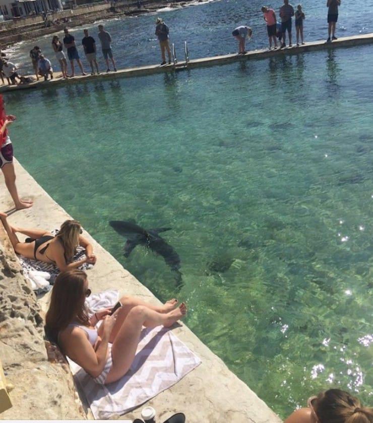 Акулы в Австралии