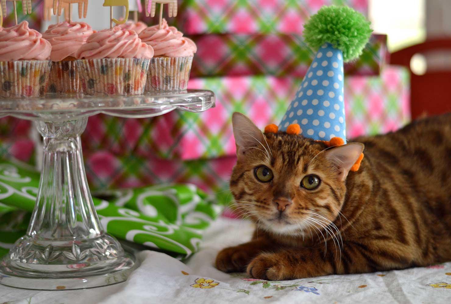 Картинки котов в день рождения