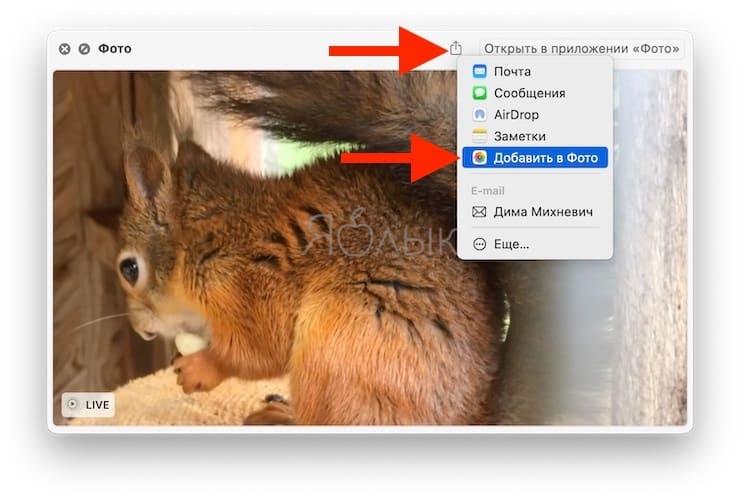 Как передать (и просматривать) Live Photo с iPhone на Mac