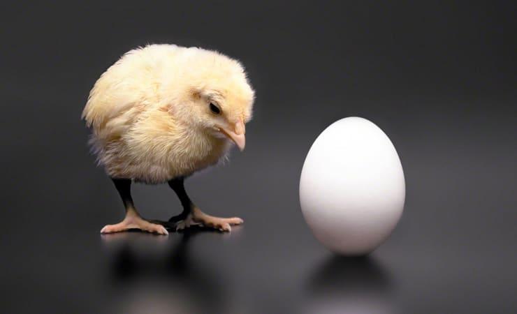 Что было первым - курица или яйцо?