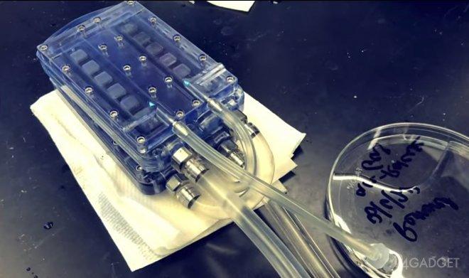 Первые тестирования искусственной почки с гемодиализом прошли успешно (видео)